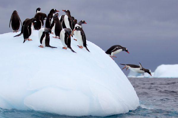 Antarctica Tours, penguins on an iceberg