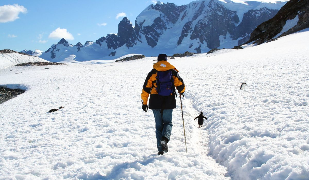 A traveller exploring Cuverville Island, Antarctica surrounded by snow and penguins