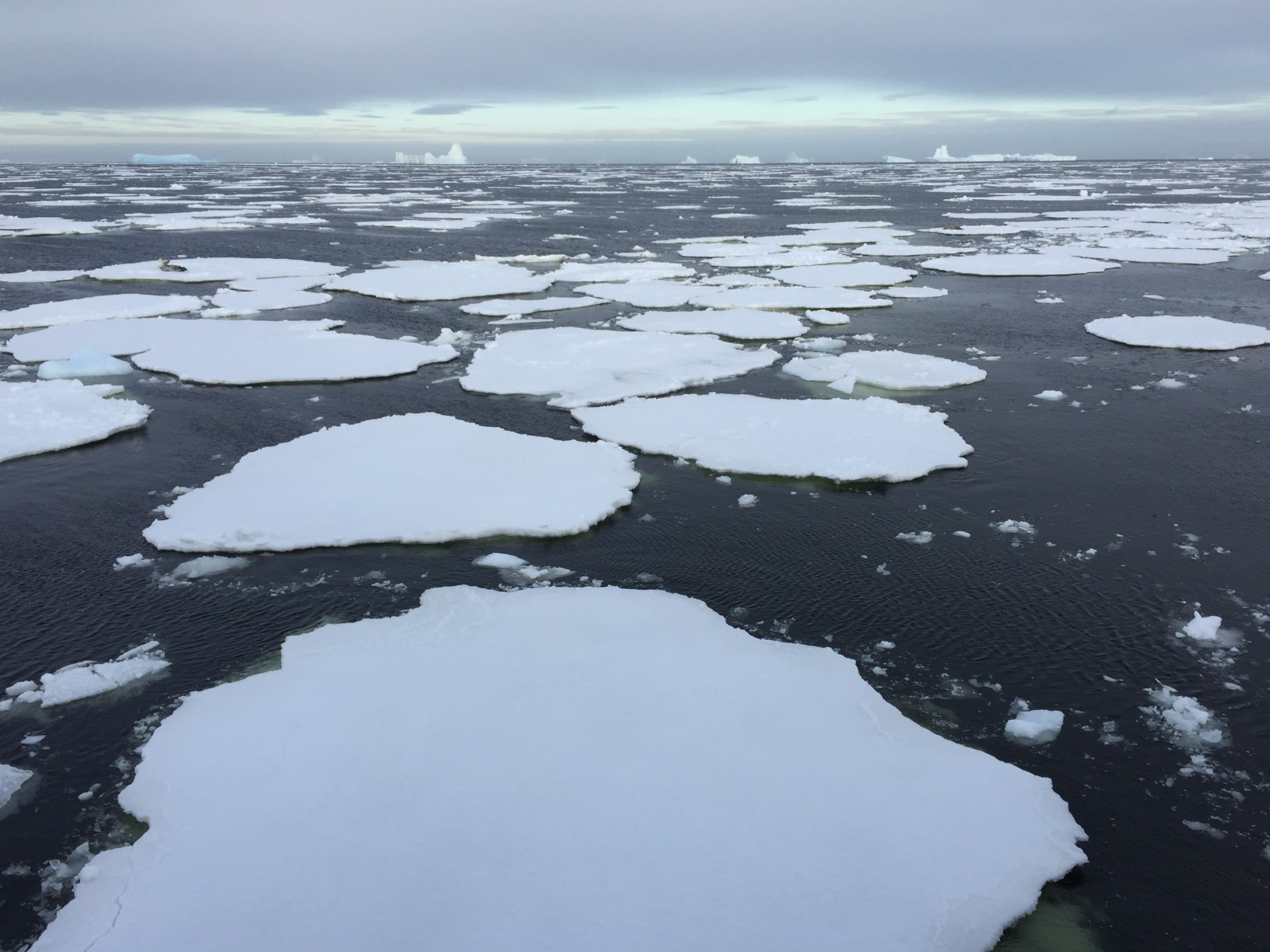 Views over pancake ice in Antarctica, as far as the eye can see