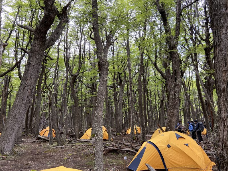 Yellow tents pitched in a woodland in Patagonia